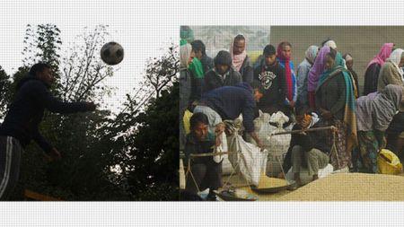 रोनाल्डो शिक्षाका लागि बर्दियामा यसरी धान संकलन गरिरहेका छन्