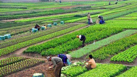 कसैले ऋण नपत्याएपछि तरकारी खेती गर्दा दुःखका दिन विदा