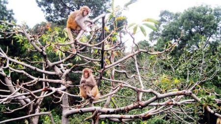 बाँदर खोज्दै जंगलमा जनप्रतिनिधि
