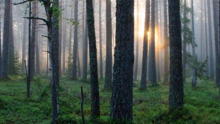नेपालमा वन, विदेश जान्छ धन : सरकारले नै किन्यो विदेशबाट १२ अर्ब ८२ करोडको फर्निचर