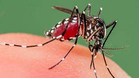 डेंगुका कारण मृत्यु हुनेको संख्या ७५ पुग्यो