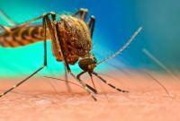 माघमा पनि भेटिए डेंगु संक्रमित