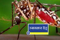 डेंगुबाट प्रभावितको संख्या तथ्यांक सार्वजनिक, ६७ जिल्लाका ७ हजार ३ सय ७० संक्रमित